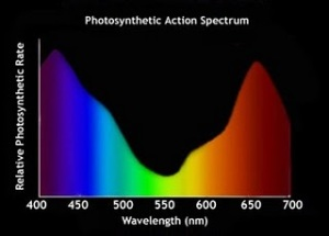 photosyntheticActionSpectrum