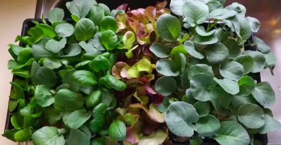 LettuceForEveryDay