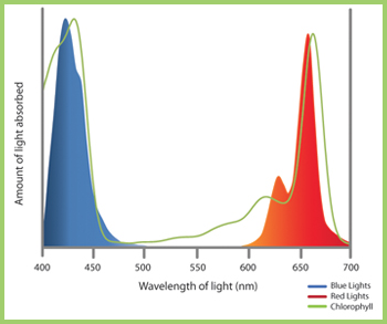 RedAndBlueWavelengths