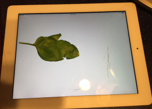 LeafOniPad